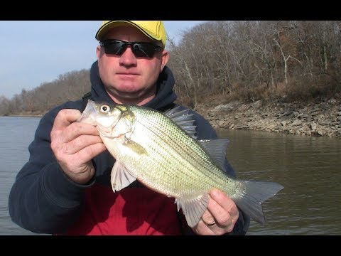 Drop Whitened Largemouth bass Angling